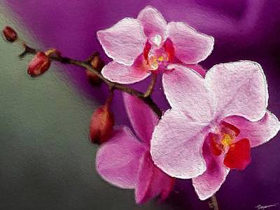 Orchids In Violets Art Print by Anthony Fishburne