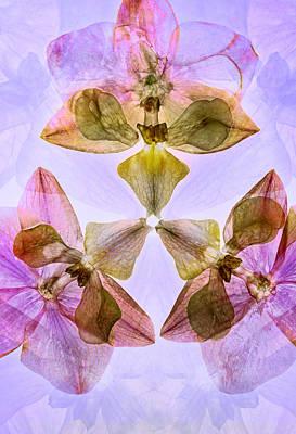 Photograph - Orchids by Jaroslaw Blaminsky