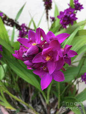 Photograph - Orchids by Laura Forde