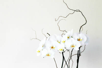 Photograph - Orchids by Lilian Forsyth