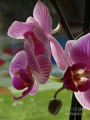Photograph - Orchids Love - Pink by Kim Tran