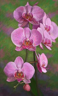 Pastel - Orchids by Lucie Bilodeau