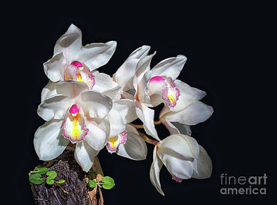 Photograph - Orchids by Lynn Bolt