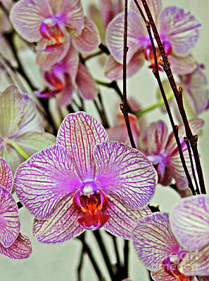 Orchids Art Print by Maria Arango