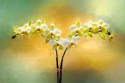 Photograph - Delicate Orchids by Maria Coulson
