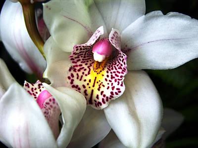 Orchids Number 18 Original