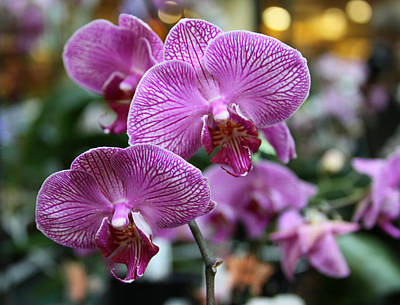 Orchids Number 4 Original