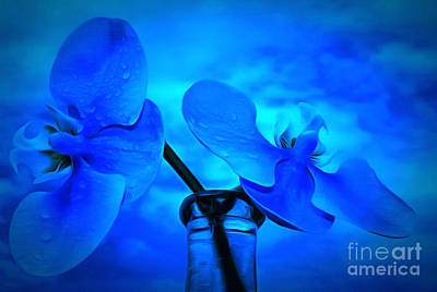 Blue Abstract Photograph - Orchids Of Blue by Krissy Katsimbras