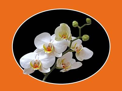 Zen Balance Photograph - Orchids On Black And Orange by Gill Billington