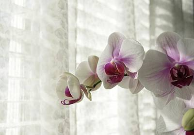 Photograph - Orchids On My Window Sill by Margie Avellino