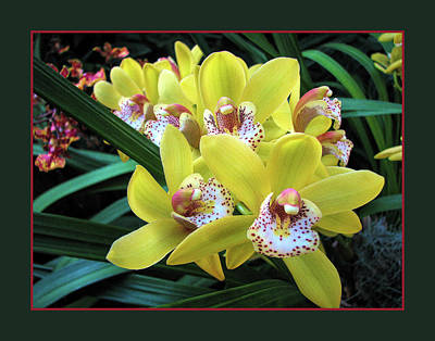 Photograph - Orchids On Parade by John Freidenberg