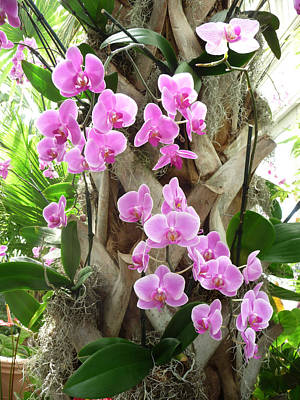 Photograph - Orchids On Parade by Margie Avellino