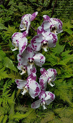 Photograph - Orchids by Pamela Walton