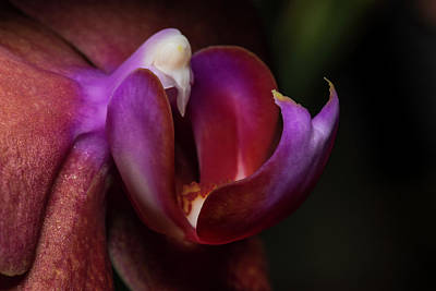 Photograph - Orchid's Purple Lips by Bob VonDrachek