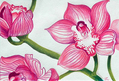 Orchid Drawing - Orchids by Ramneek Narang