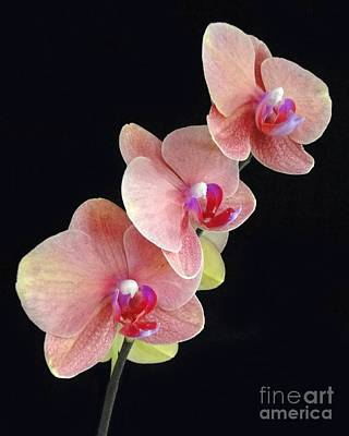 Photograph - Orchids Reach For The Rainbow by Barbie Corbett-Newmin