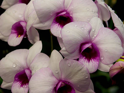 Photograph - Orchids by Roger Mullenhour