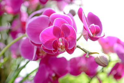 Photograph - Orchids by Ronda Broatch