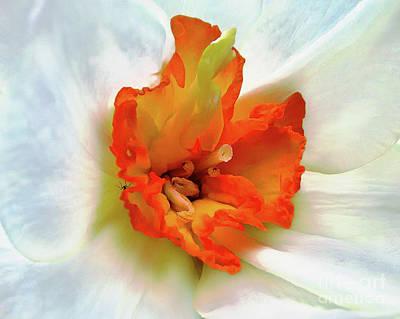 Photograph - Orchid's Soul by Jolanta Anna Karolska
