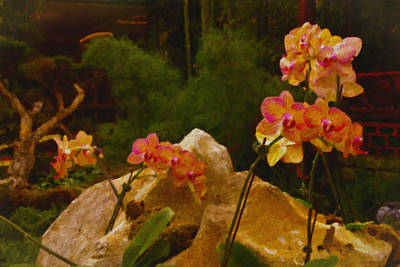 Orchids Art Print by Stephen Campbell