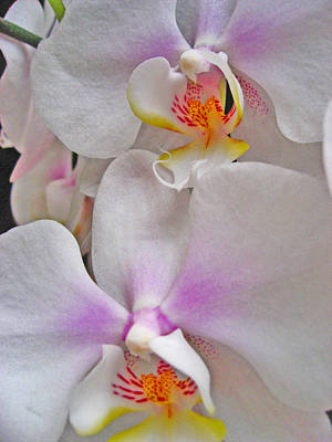Orchids. Tenerife. Canary Islands. Original by Andy Za
