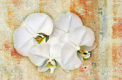 Orchid Digital Art - Orchids Upon The Rough by Andee Design
