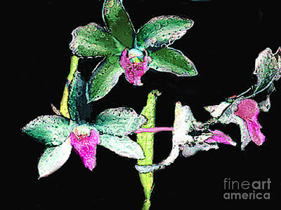 Painting - Orchids - Watercolor Brush Painting by Merton Allen