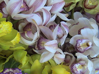 Orchids Art Print by William Thomas
