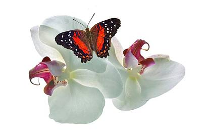 Photograph - Orchids With Butterfly by Manfred Lutzius