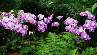 Orchids With Fern-panoramic Art Print by Margie Avellino