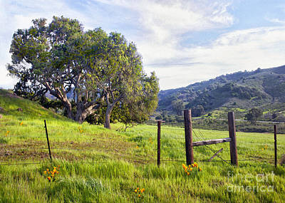 Photograph - Orcutt Hills Oak by Sharon Foster