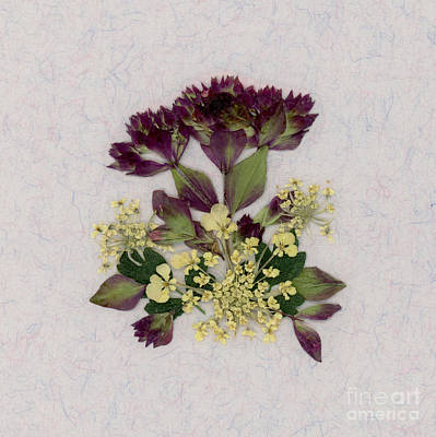 Oregano Florets And Leaves Pressed Flower Design Art Print