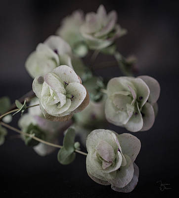 Photograph - Oregano Flowers by Teresa Wilson