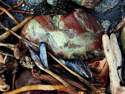 Photograph - Oregon Beach Treasures #1 by Dreamweaver Gallery