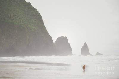 Oregon Cannon Beach Dog Landscape Art Print by Andrea Hazel Ihlefeld