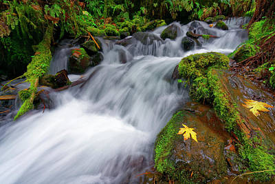 Photograph - Oregon Cascade by Jonathan Davison