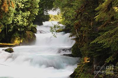 Photograph -  Oregon Cascade by Theresa Willingham