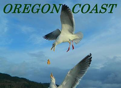 Photograph - Oregon Coast Amazing Seagulls by Gallery Of Hope