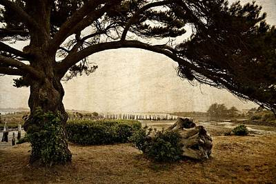 Photograph - Oregon Coastline With Tree by Michelle Calkins