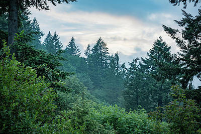 Photograph - Oregon Evergreens At Dusk by Anthony Doudt