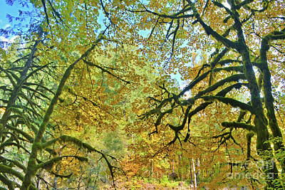 Photograph - Oregon Fall Colors by Third Eye Perspectives Photographic Fine Art