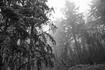 Photograph - Oregon Fog by Margaret Pitcher