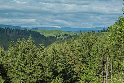 Photograph - Oregon Forest View by Anthony Doudt