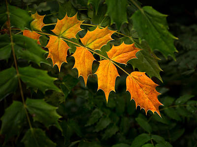 Photograph - Oregon Grape Autumn by Mary Jo Allen