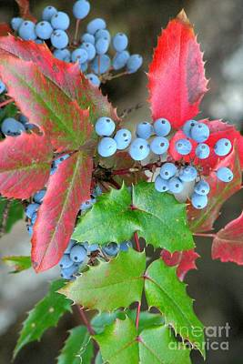 Photograph - Oregon Grape by Frank Townsley