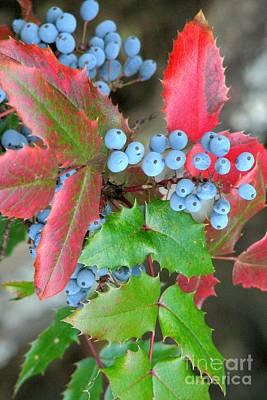 Photograph - Oregon Grape by Frank Townsley