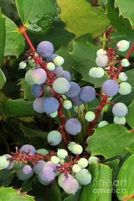 Photograph - Oregon Grape Fruit by Frank Townsley