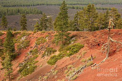 Photograph - Oregon Landscape - Red Crater by Carol Groenen
