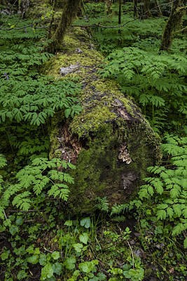 Photograph - Oregon Log In Forest  by John McGraw