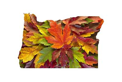 Oregon Maple Leaves Mixed Fall Colors Background Art Print